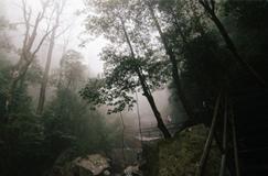 انجمن حمایت از محیط زیست گیلان