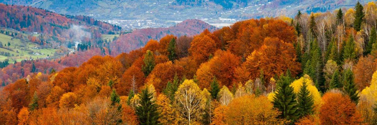زندگی پایدار یعنی هماهنگی وسازگاری با طبیعت